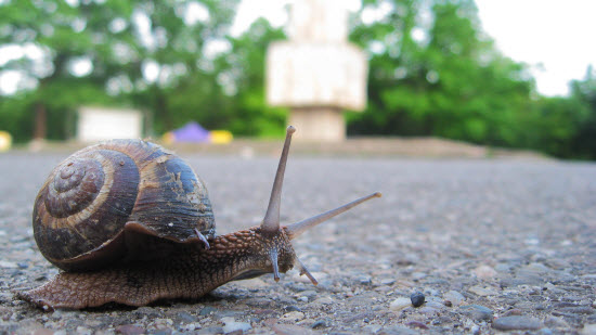 slow as a snail